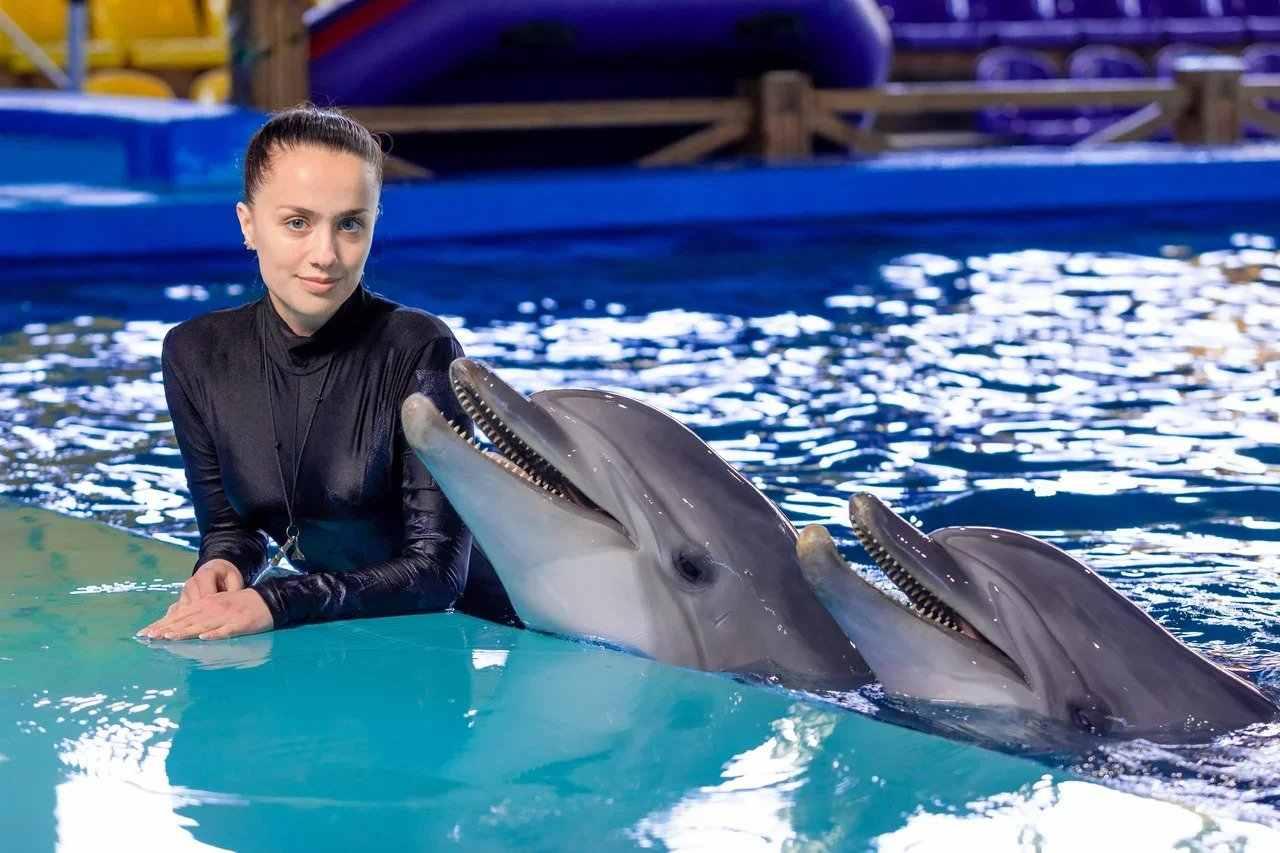 шоу программа дельфинария